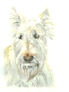 Scottish Terrier - Watercolors by Susi
