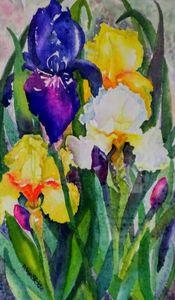 Tall Irises - Darlene Van Sickle