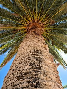 The Palm Perspective