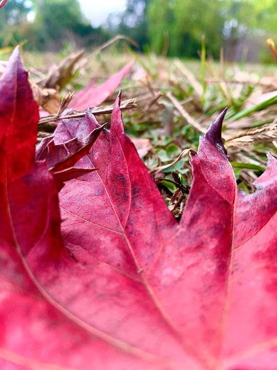 Fall Leaf - LunaPhotography