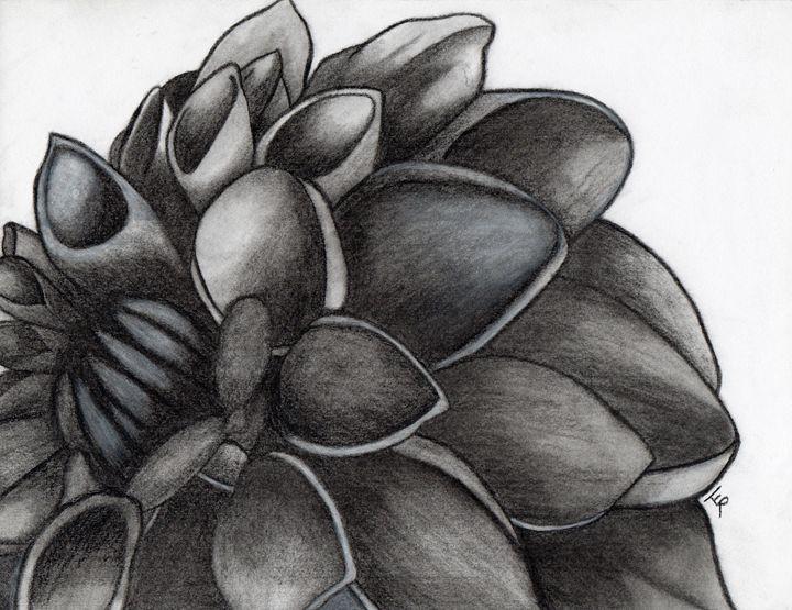 Dahlia - Terra Rosenberg Art