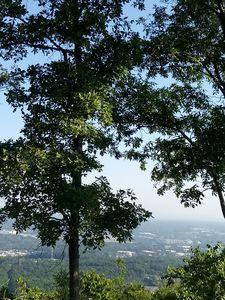 The Hill Marrietta Greenery