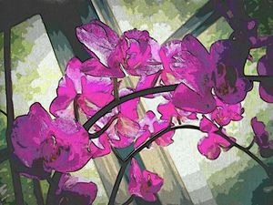 Orchids at Windows