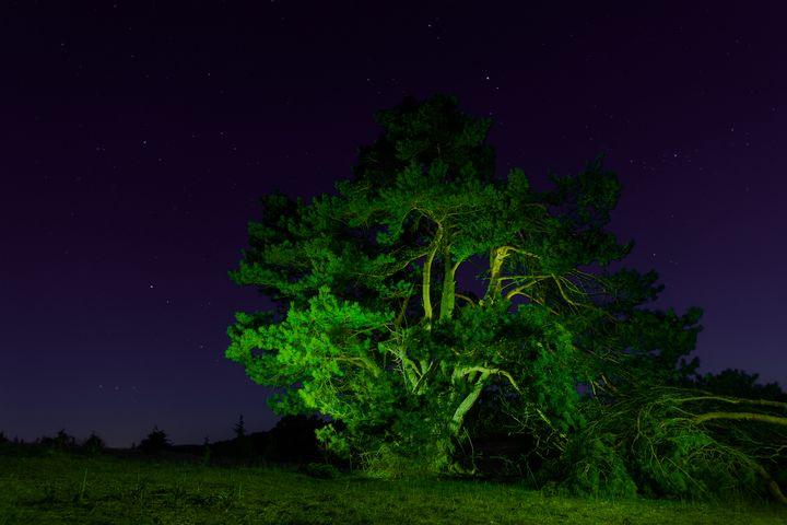 A scene from Bottingen Germany night - Vig Szilard