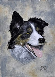 Pedigree border collie