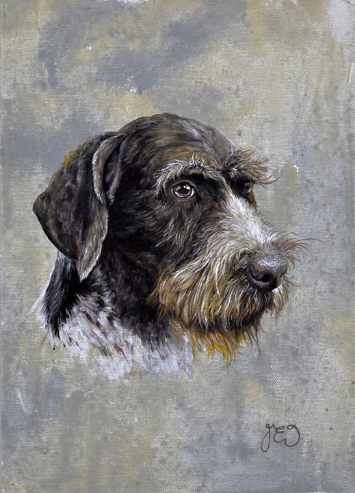 Long haired German Pointer dog - James Ineson
