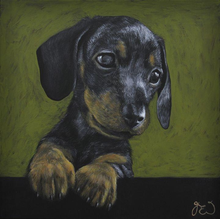 dashchund puppy - James Ineson