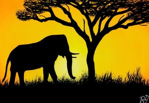 Savannah | Sunset | Elephant