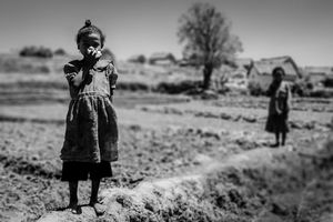 The little girl in the rice field