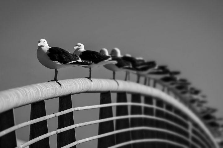 Seagulls - Pierre-Yves Babelon