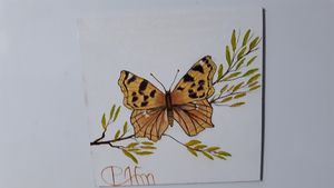Butterfly canvas with magnet backing