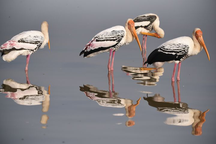 Painted Storks in Still Water - SDH Creations