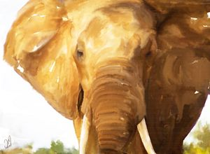 elephant - Jovan watercolors