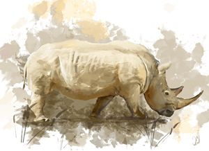 Rhino - Jovan watercolors