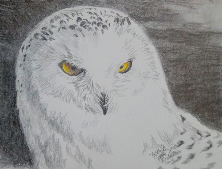 Snowy owl in pencil - NancyJBailey
