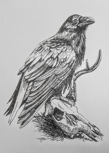 Raven, pen and ink