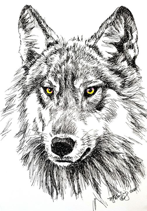 Eyes of the Wolf - NancyJBailey