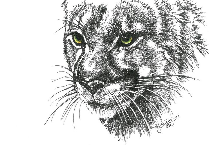 Mountain Lion in Pen and Ink - NancyJBailey