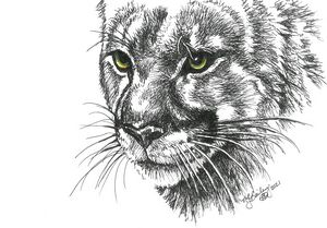 Mountain Lion in Pen and Ink
