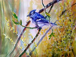 Bluejay in Yellow - NancyJBailey