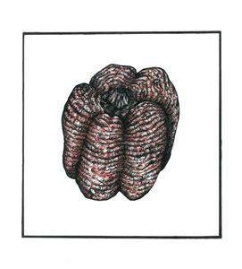 Textured Pepper - Katherine Brown