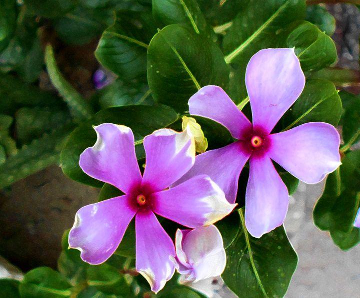 Flower - Aar Vee Collection