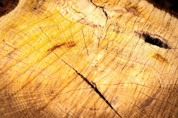 Wood - Pash3n Photography