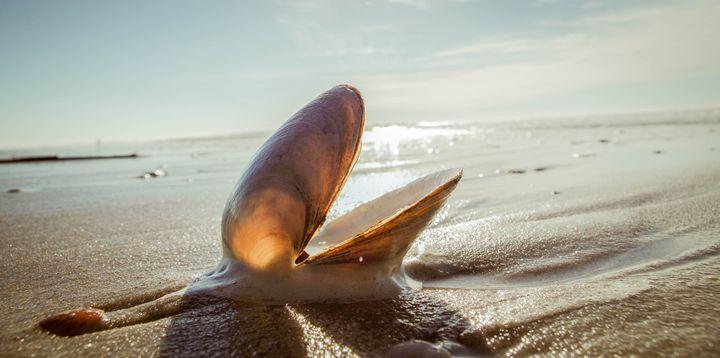 Shell - Pash3n Photography