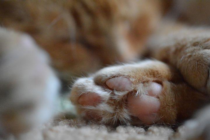 Kitty Paw - Artfully Reene