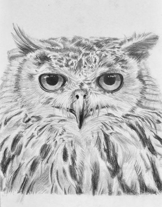 Owl 2 - Hyacinth Hill