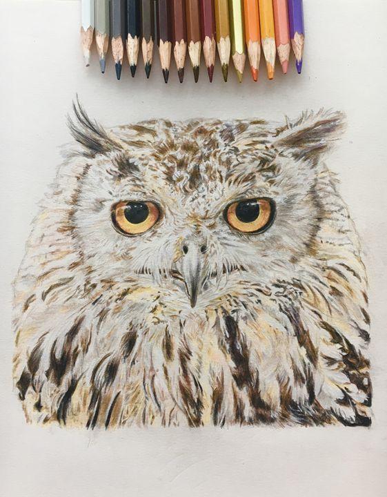 Owl - Hyacinth Hill