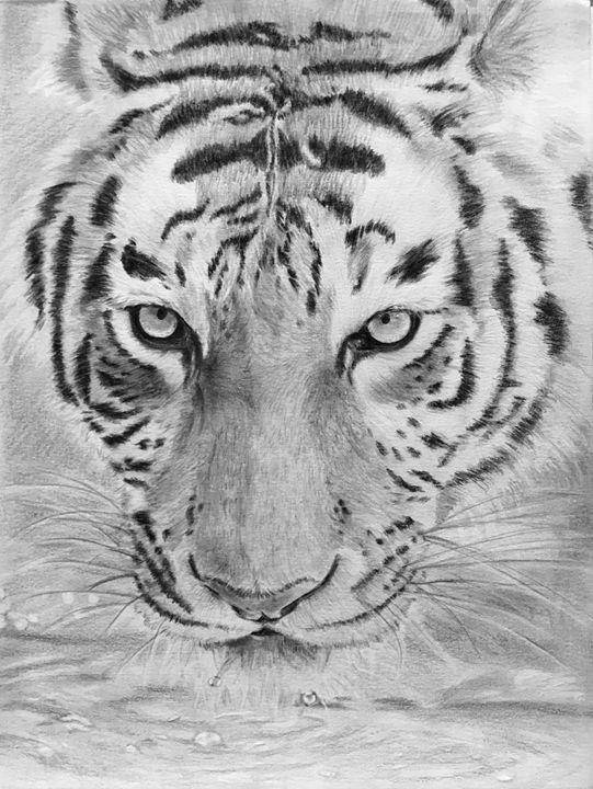 Tiger - Hyacinth Hill