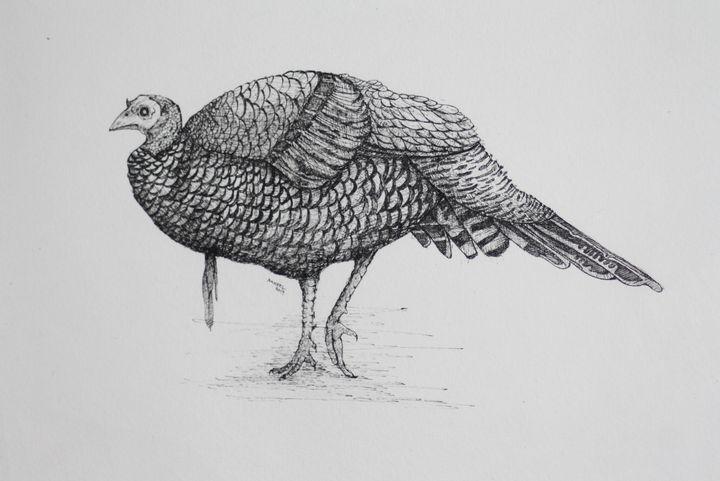 Turkey 2(pen and ink) - syed akheel art