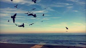 Shoreline Bird Dance