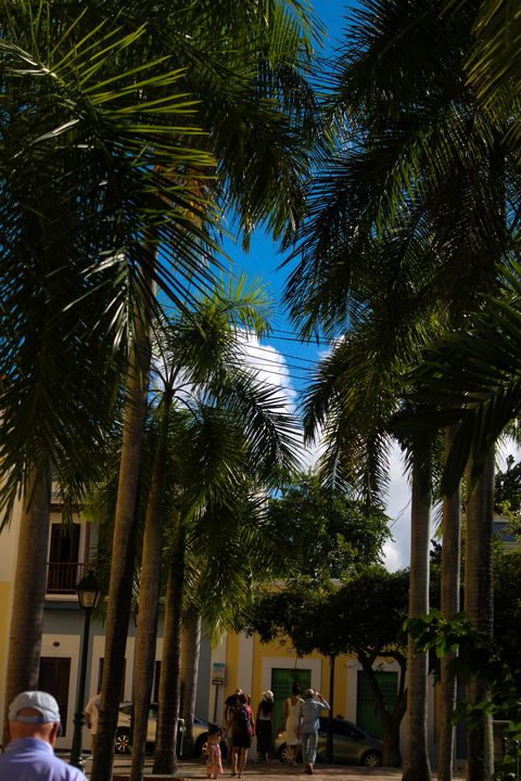 Palm Trees in PR - Marley D'Anton