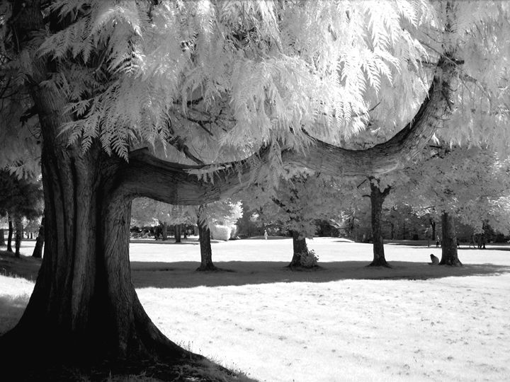 Tavistock Meadows - Brian Aldridge