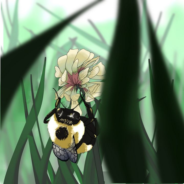 Bumble bee - Amanda Rose