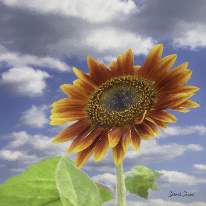 Autumn Sunflower - Deborah Shupenis Photography
