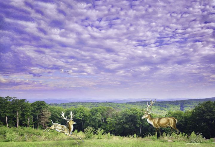 Deer on summer day - Deborah Shupenis Photography
