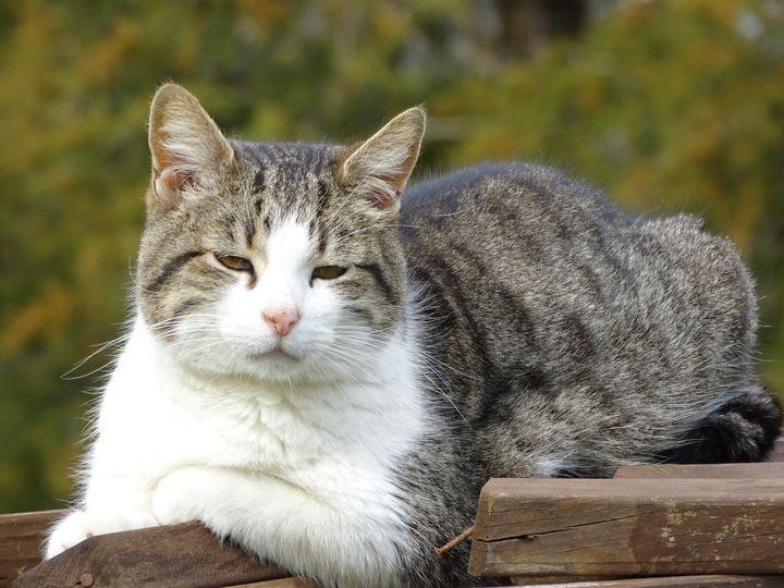 Cat - MJ photography