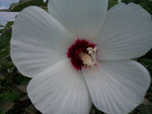 Flower look