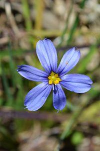 Pretty Purple Swamp Flower