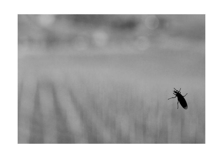 0068_Bug - Nedim Bajraktarevic
