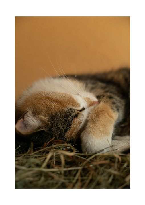 114_Sleeping cat (1) - Nedim Bajraktarevic