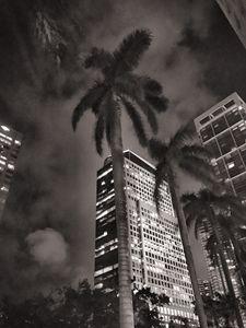 Miami-nights