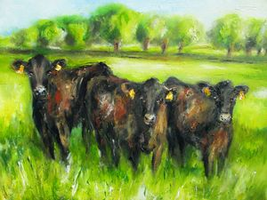 three curious black cows say hello