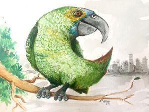 Round parrot