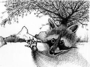 Raccoon At Rio