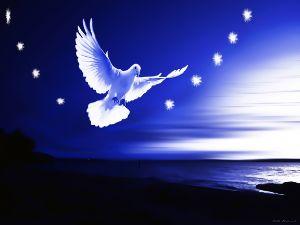 Dove Delight