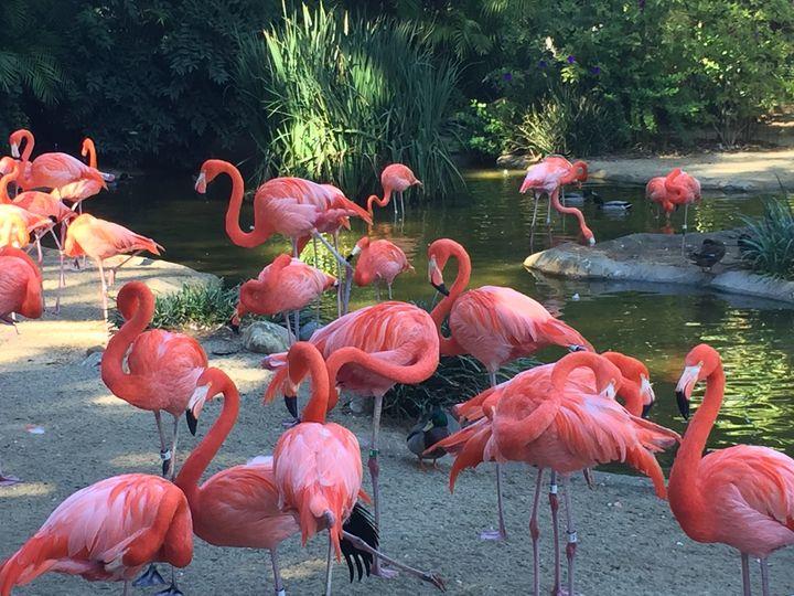 As pink as Flamingo - The Art of Ashutosh